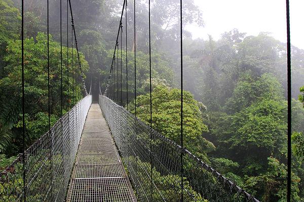 Rope bridge across ravine
