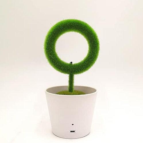 Star plant (air purifer)