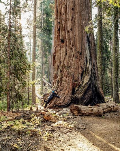 Olivia Hale - Sequoia NP