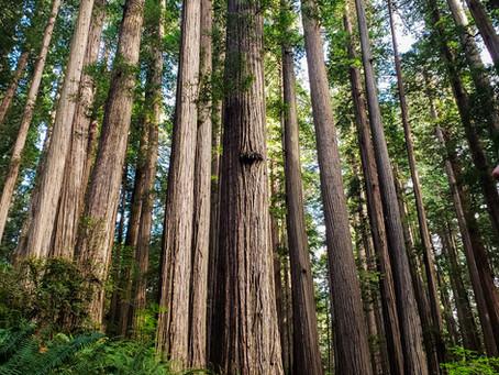 My Favorite Hikes Around Redwoods National Park