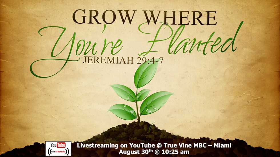Grow Where You're Planted - Jeremiah 29:4-7