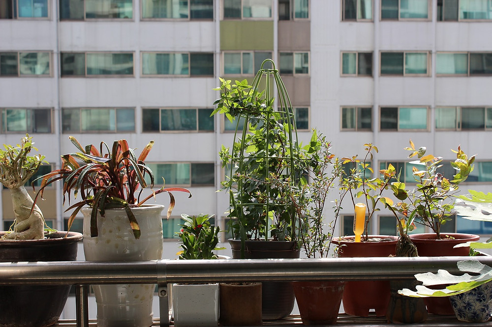 potted-plant-99359_1280.jpg