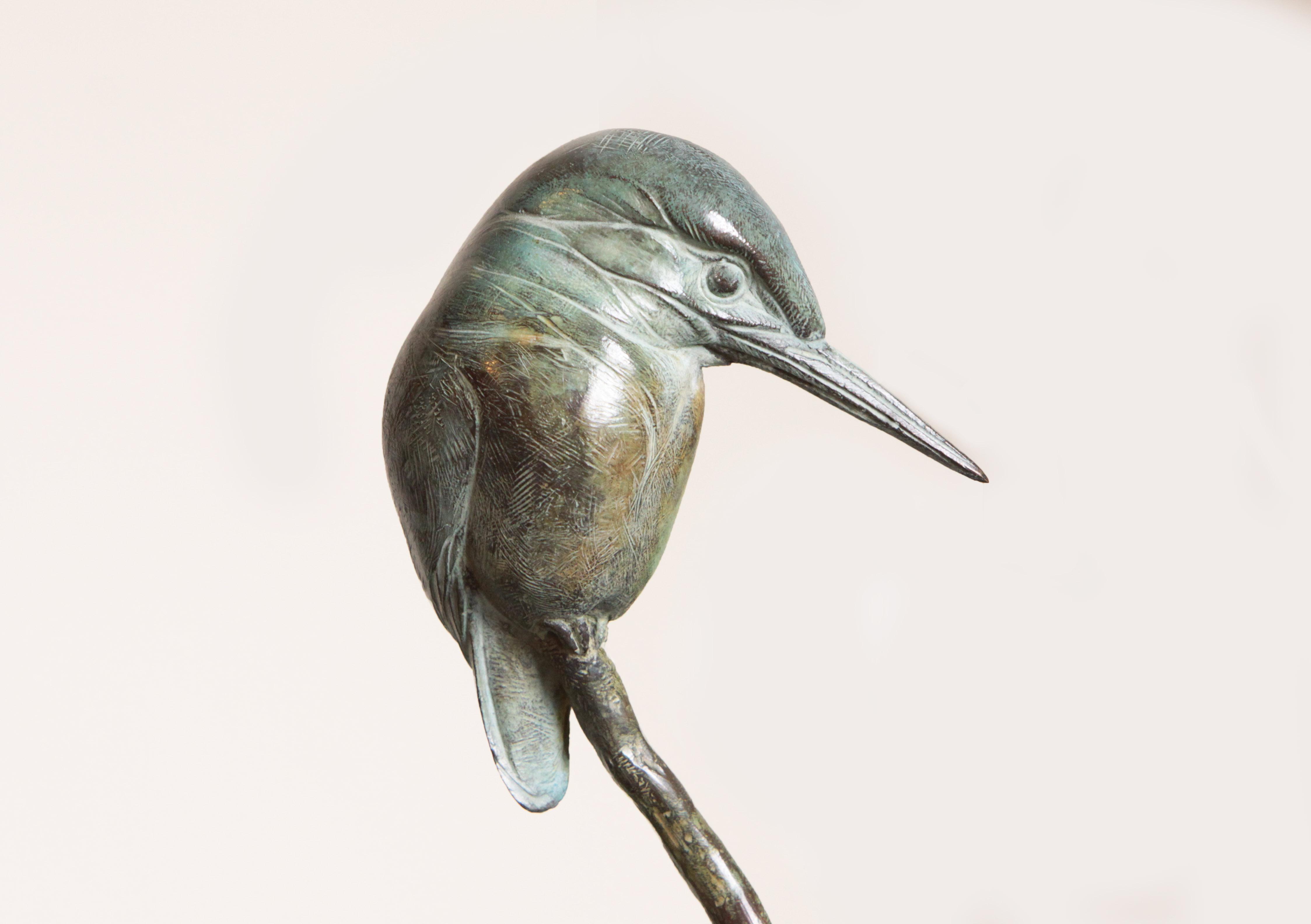 Bronze Kingfisher on Stick