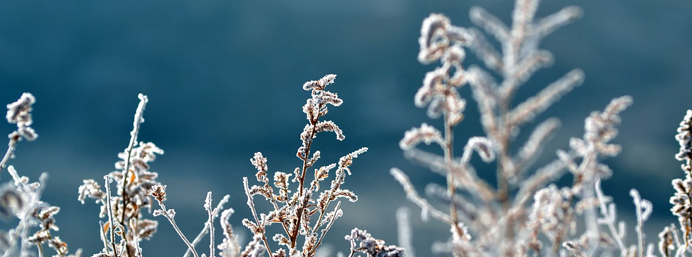 Background frosted grass.PNG