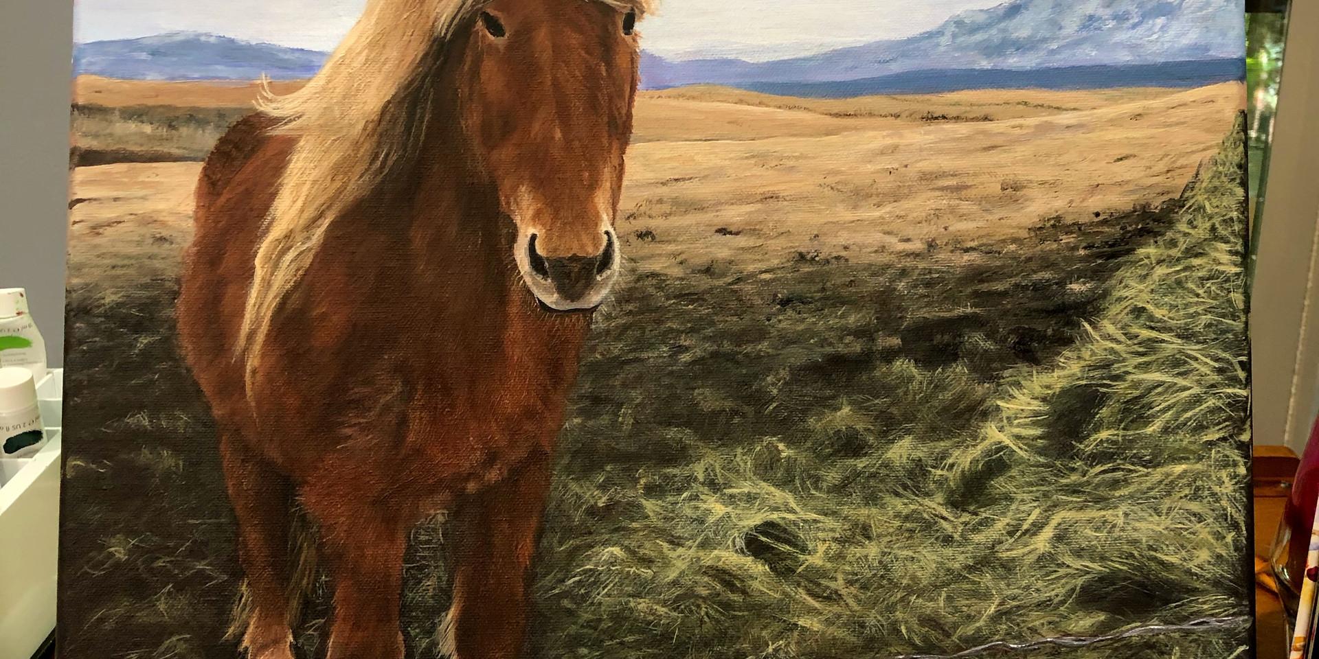 Iceland Wild Horse.jpg