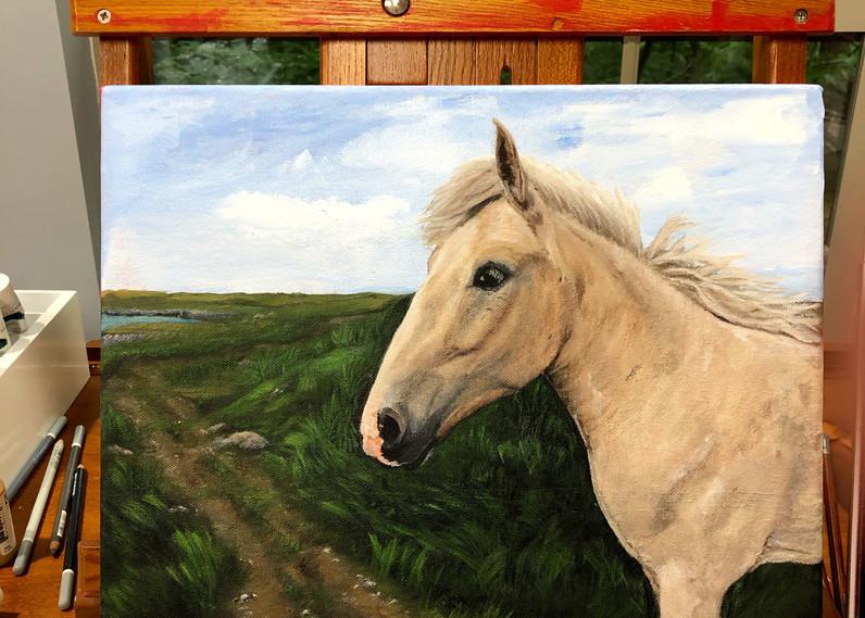 Bonavista Wild Horse.jpg