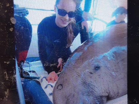 Discovering Dugong Data