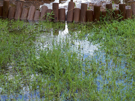 Tips to help lawns recover from flood damage
