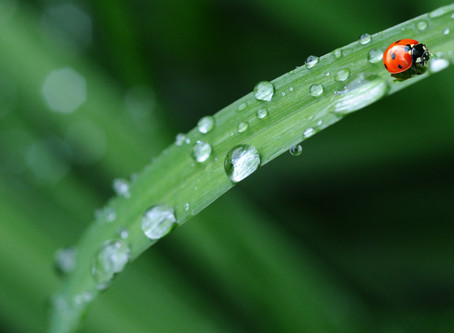 7 Signs your lawn is not draining properly