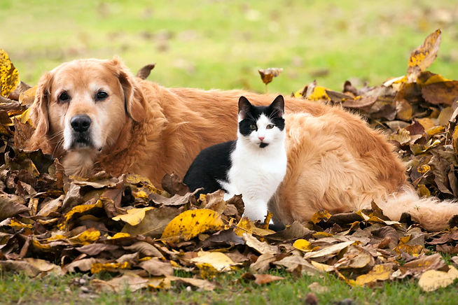 cat-and-dog-and-autumn-istock_1281x854.jpg