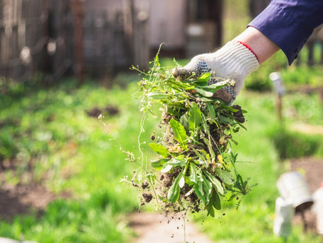 6 Tips for preventing weeds
