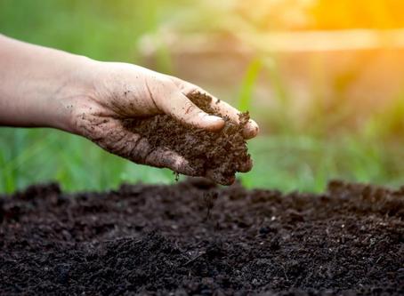 When should I fertilize my Maryland lawn?