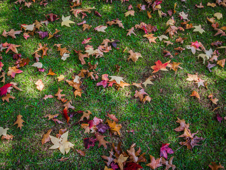 Uses for Fall leaves and debris