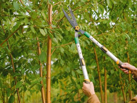 Tree Pruning 101 for Marylanders