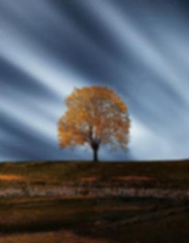 breathtaking-calm-environment-35884.jpg