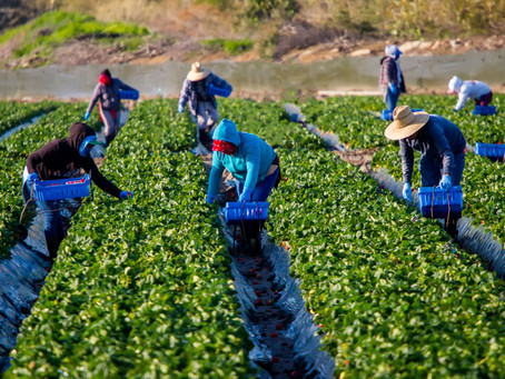 Racism in the Food System: How It Poisons Our Food Supply