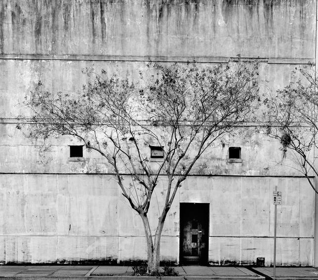 tree_door_natchez.jpg
