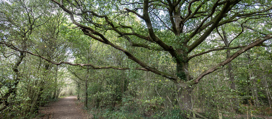 The magic of ancient woodland.