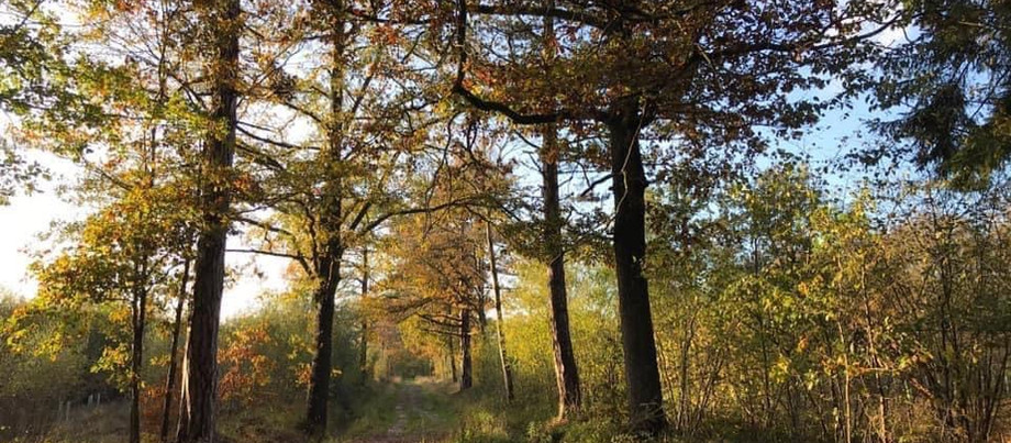 Community arts competition captures the beauty of local woodland