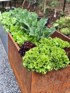 Deilig salat fra hagen!