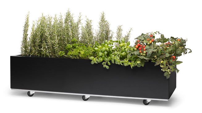 BEDD 120 x 40 cm. med urter og tomater