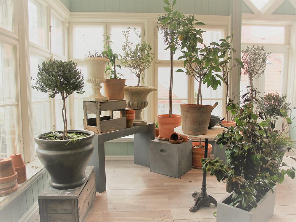 Overvintrende planter