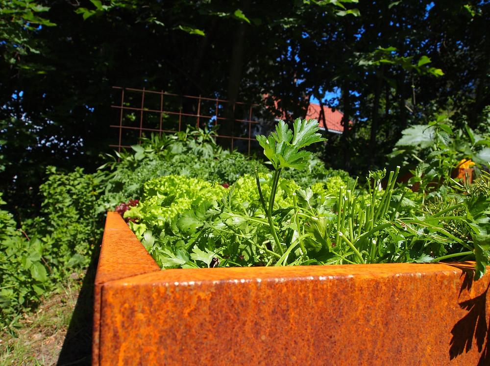 Plantekasse i rust fra BEDD
