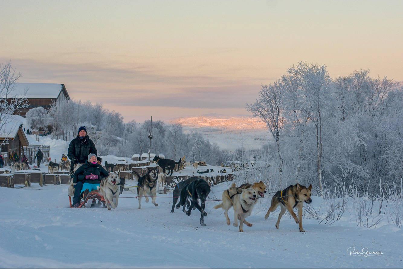 Husky winter excursion