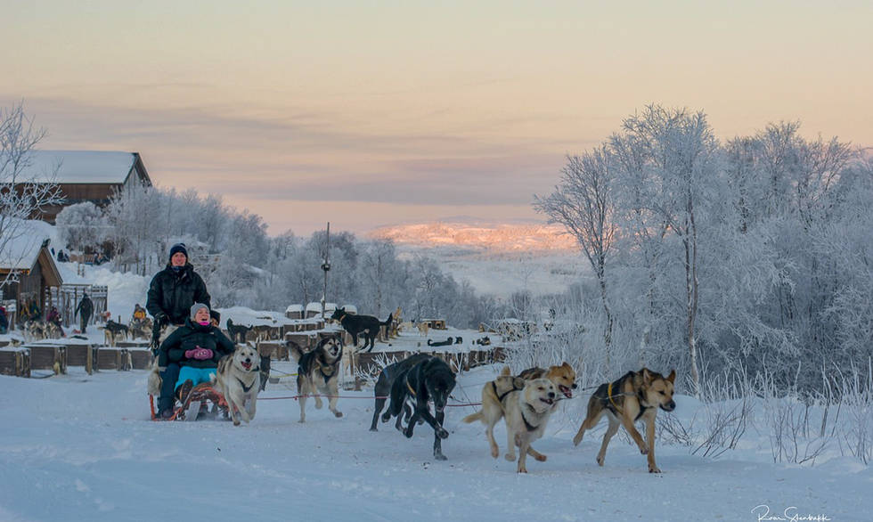 Husky winter excursion