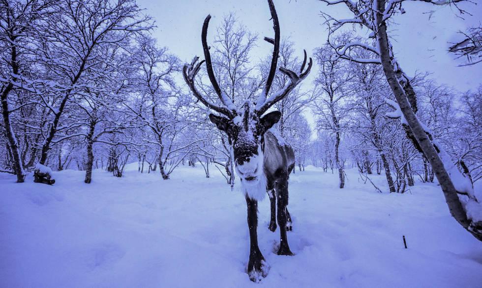 Reindeer Snowhotel Kirkenes
