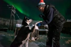 Husky aurora