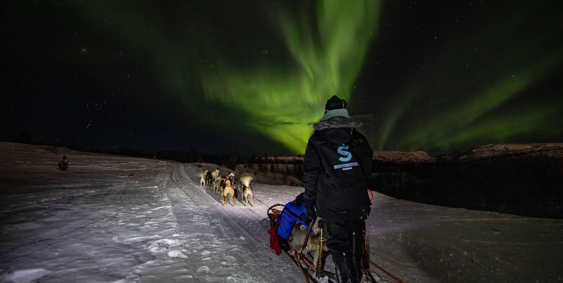 northern lights dog sledding Kirkenes