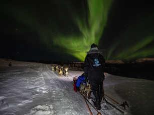 Husky Northern Lights Safari