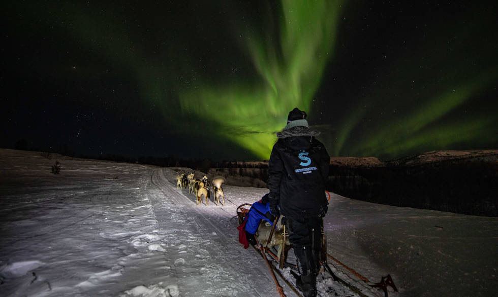 northern lights dog sledding Kirkenes