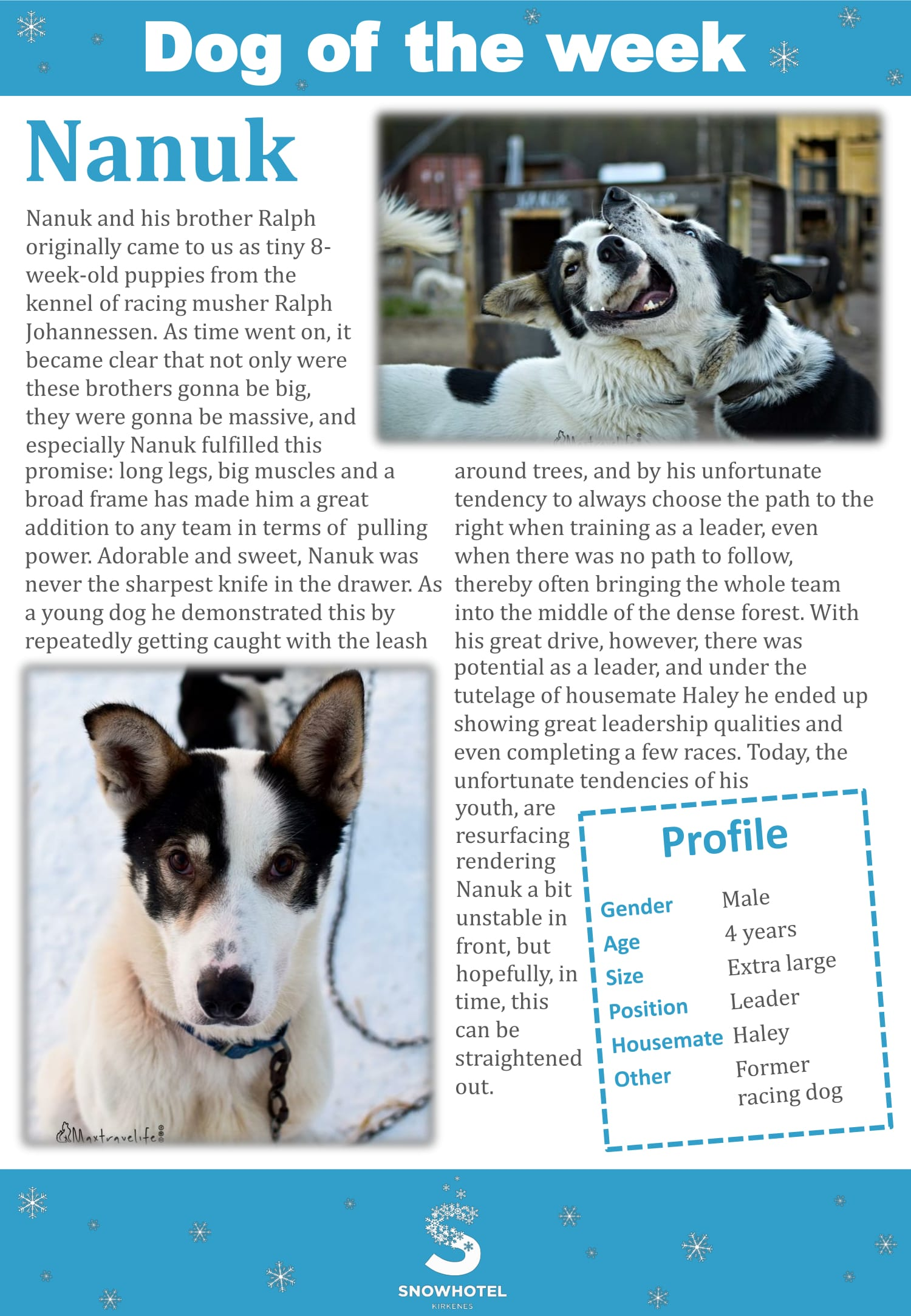 dog_of_the_week_Nanuk-1