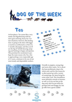 dog of the week Teo -1
