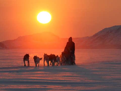 Husky Safari