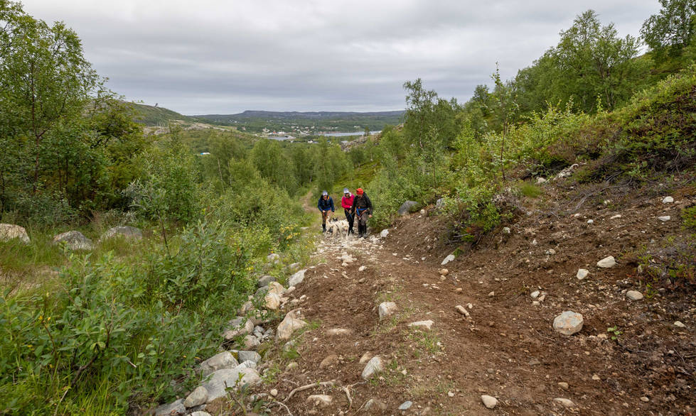 Husky Mountain Hike Kirkenes