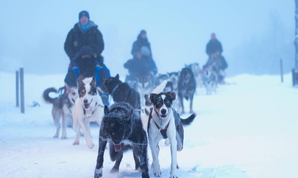 Husky tours Kirkenes