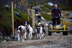 Husky wagon training