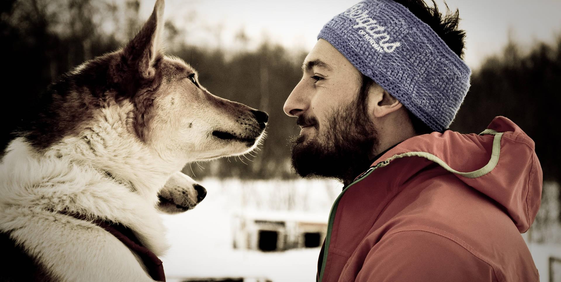 Dogsledding Kirkenes