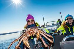 King crab Hurtigruten tour