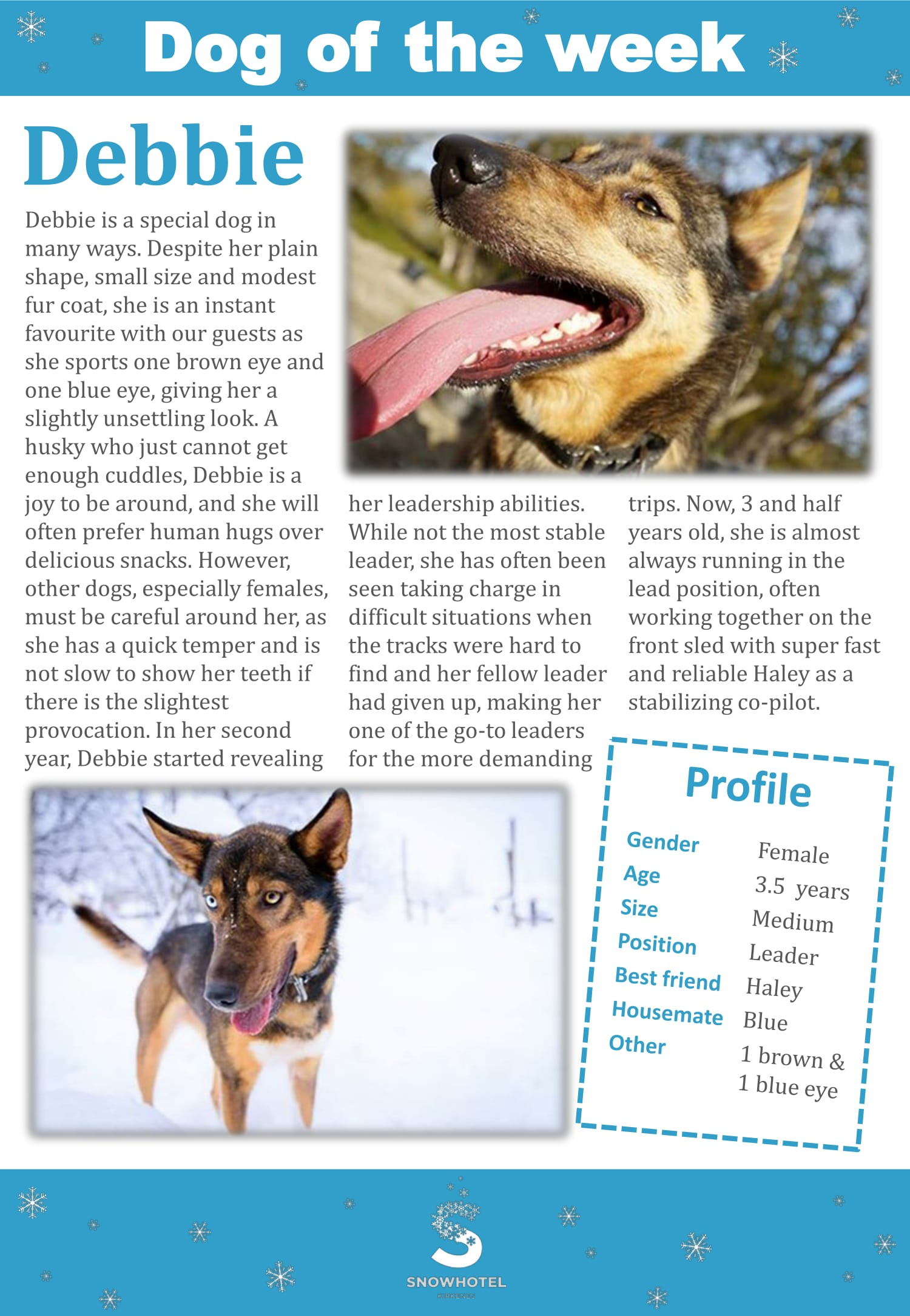 dog_of_the_week_Debbie-1