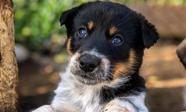 #puppyfriday Is HERE❣️🐶_._._._._._._._.