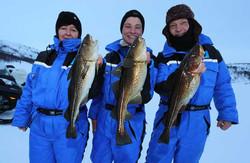 Three cods