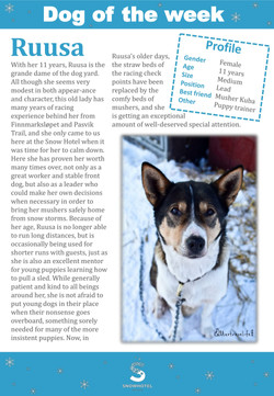 11_dog_of_the_week_Ruusa-1