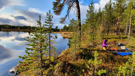 Wilderness touring in Pasvik valley