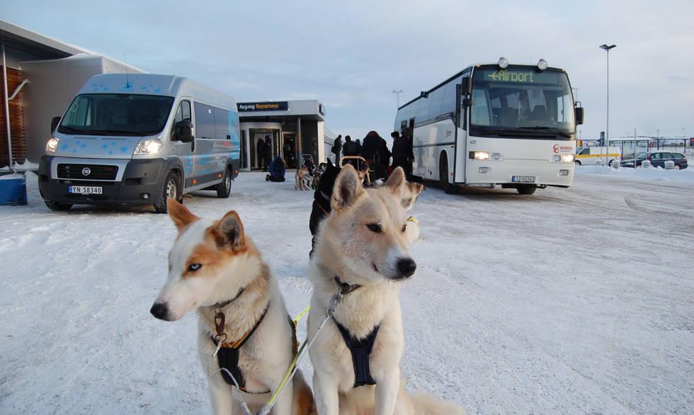 Husky taxi Kirkenes