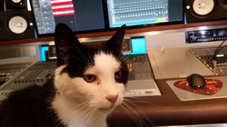 Studio cat, Mr Bruno!