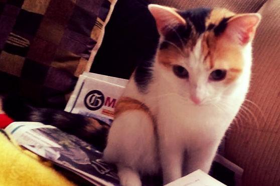 KittyNewspaper_edited.jpg